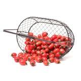 Cherry Tomatoes-close-up Studiofotografie op een witte achtergrond Zes verscheidenheden van tomatenkers royalty-vrije stock afbeelding