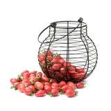 Cherry Tomatoes-close-up Studiofotografie op een witte achtergrond Zes verscheidenheden van tomatenkers royalty-vrije stock foto's