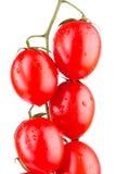 Cherry Tomatoes Closeup Immagine Stock