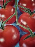Cherry Tomatoes Closeup fotografia de stock royalty free