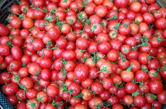 Cherry Tomatoes dans le supermarché photo stock