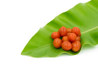 Cherry Tomatoes, Focus on fruit of Tomato. Stock Images