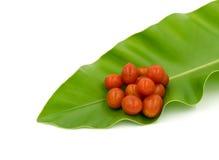 Cherry Tomatoes, Focus on fruit of Tomato. Royalty Free Stock Image