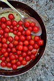 Cherry Tomatoes fresco arrostito Fotografie Stock