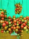 Cherry Tomatoes stock afbeelding