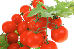 Cherry tomatoes on green branch Stock Photos