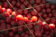 Cherry Tomatoes at Grocery Store Royalty Free Stock Image