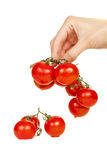 Cherry tomatoes in hand Royalty Free Stock Photo