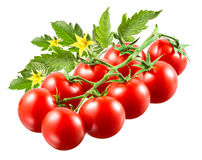 Cherry tomatoes with leaves on branch isolated. Royalty Free Stock Photography