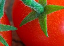 Cherry Tomatoes op Stam royalty-vrije stock afbeeldingen