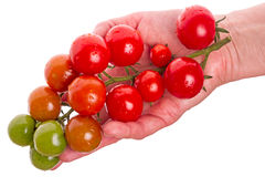 Cherry tomatoes on a palm Stock Images