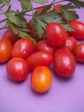 Cherry tomatoes and parsley Royalty Free Stock Photo