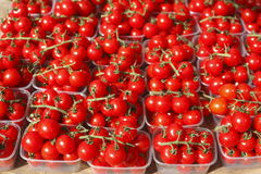 Cherry tomatoes in plastic bowls. On a market stall royalty free stock photography