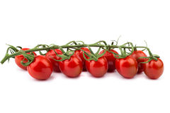 Cherry tomatoes. Ripe cherry tomatoes on the branch Stock Photography