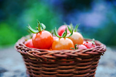Cherry tomatoes in a small basket on an old wooden surface, spac Stock Image