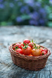 Cherry tomatoes in a small basket on an old wooden surface Stock Image