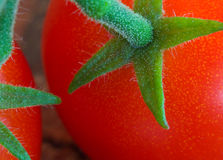 Cherry Tomatoes on Stem. Up close with selective focus Royalty Free Stock Images