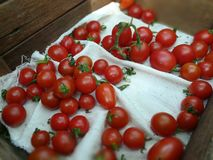 Cherry tomatoes. A cherry tomato is a rounded small fruited tomato thought to be an intermediate genetic admixture Stock Photos