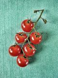Cherry tomatoes. View of cherry tomatoes isolated in green background Royalty Free Stock Images