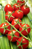 Cherry tomatoes on vine. Closeup of ripe cherry tomatoes on vine with green vegetables in background royalty free stock photography