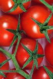 Cherry tomatoes on vine. Royalty Free Stock Image