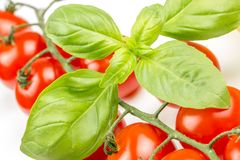 Cherry tomatoes on the vine with basil Royalty Free Stock Photo