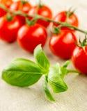 Cherry tomatoes on the vine Stock Image