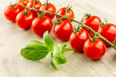 Cherry tomatoes on the vine Royalty Free Stock Image