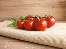 Cherry Tomatoes on a Vine Stock Image