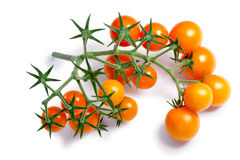 Cherry tomatoes on vine, paths Royalty Free Stock Photos