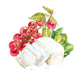 Cherry tomatoes on the vine with Ricotta cheese. Watercolor hand drawn illustration. Isolated on white background Royalty Free Stock Image