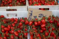 Cherry Tomatoes on Vines in a Market in Italy Stock Image