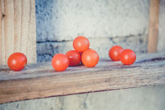 Cherry tomatoes, vintage photos, scattered tomatoes Royalty Free Stock Images