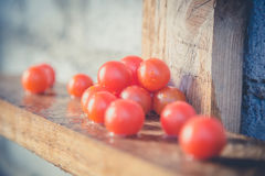 Cherry tomatoes, vintage photos, scattered tomatoes Stock Image