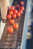 Cherry tomatoes, vintage photos, scattered tomatoes Royalty Free Stock Photography