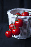 Cherry tomatoes in white basket. On black background Stock Photos