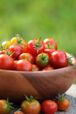 Cherry tomatoes in a  wooden plate. Autumn background. Stock Photography