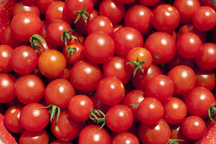 Harvest of Ripe Red Cherry Tomates Royalty Free Stock Photos