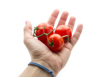 Cherry tomatos. In hand isolated on white background Stock Photography