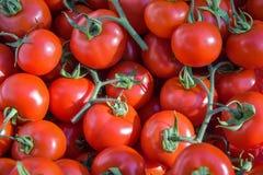 Cherry Tomatos Imagens de Stock Royalty Free
