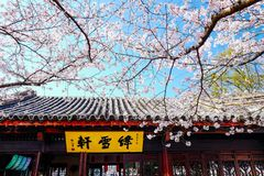 Cherry Blossom valley,wuxi,china. Cherry tower,Wuxi Taihu Yuantouzhu Park Cherry Blossom valley stock photography