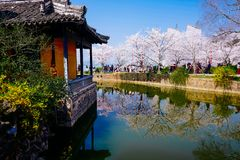 Cherry Blossom valley,wuxi,china. Cherry tower,Wuxi Taihu Yuantouzhu Park Cherry Blossom valley stock photos