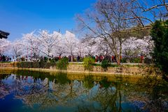 Cherry Blossom valley,wuxi,china. Cherry tower,Wuxi Taihu Yuantouzhu Park Cherry Blossom valley stock images