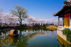 Cherry Blossom valley,wuxi,china. Cherry tower,Wuxi Taihu Yuantouzhu Park Cherry Blossom valley stock image