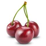 Cherry tre royaltyfria foton
