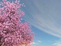 Cherry Tree Stock Fotografie
