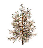 Cherry tree. Digital image of a oriental cherry tree blooming isolated on white background vector illustration