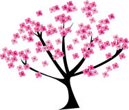 Cherry tree. In blossom on white Stock Photos