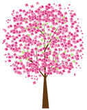 Cherry tree Royalty Free Stock Photo