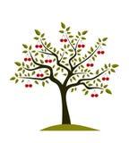 Cherry tree Royalty Free Stock Photography